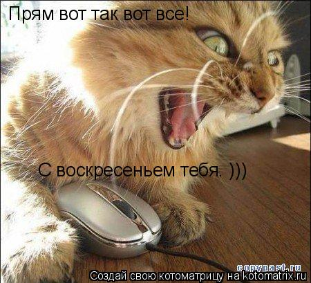 Котоматрица: Прям вот так вот все! С воскресеньем тебя. )))