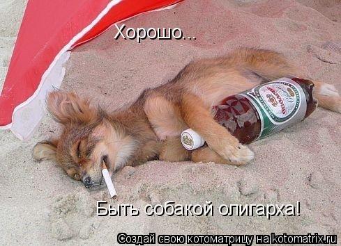 Котоматрица: Хорошо... Быть собакой олигарха!