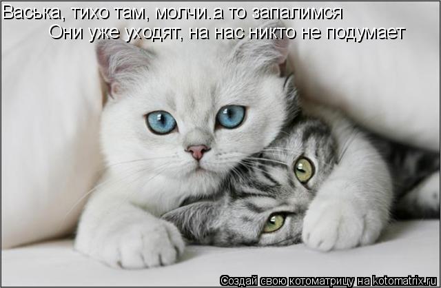 Котоматрица: Васька, тихо там, молчи.. Они уже уходят, на нас никто не подумает а то запалимся