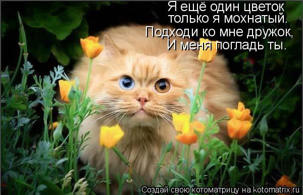Котоматрица: Я ещё один цветок только я мохнатый. Подходи ко мне дружок, И меня погладь ты.