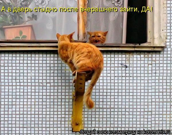 Котоматрица: А в дверь стыдно после вчерашнего зайти, ДА!