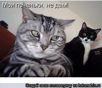 Котоматрица: Мои печеньки, не дам!