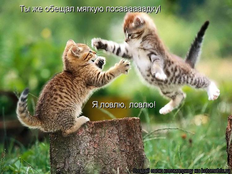 Котоматрица: Ты же обещал мягкую посаааааадку! Я ловлю, ловлю!