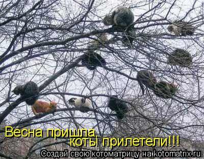 Котоматрица: Весна пришла,  коты прилетели!!!