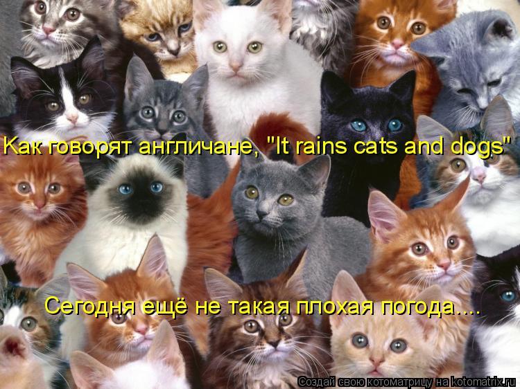 "Котоматрица: Kак говорят англичане, ""It rains cats and dogs"" Сегодня ещё не такая плохая погода...."