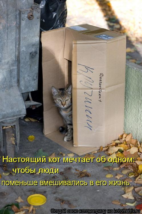 Котоматрица: Настоящий кот мечтает об одном: чтобы люди  поменьше вмешивались в его жизнь.