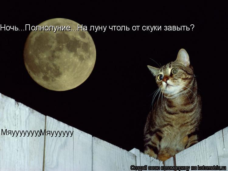 Котоматрица: Ночь...Полнолуние...На луну чтоль от скуки завыть? Мяуууууууу ,Мяуууууу ЭХ ЖАЛЬ Ч