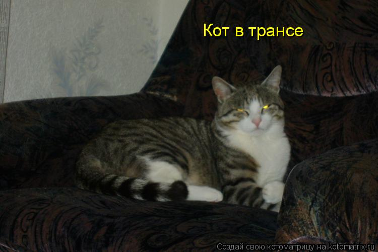 Котоматрица: Кот в трансе