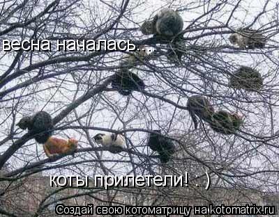 Котоматрица: весна началась.... коты прилетели! : )