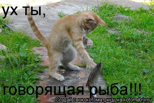 Котоматрица: говорящая рыба!!! ух ты,