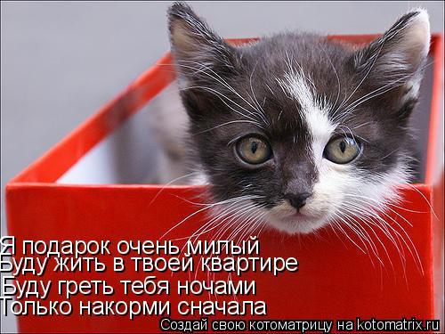 Котоматрица: Буду греть тебя ночами Я подарок очень милый Только накорми сначала Буду жить в твоей квартире