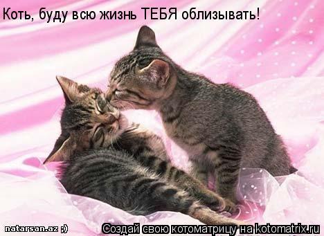 Котоматрица: Коть, буду всю жизнь ТЕБЯ облизывать!