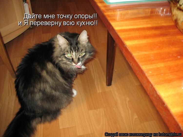Котоматрица: Дайте мне точку опоры!! и Я переверну всю кухню!!