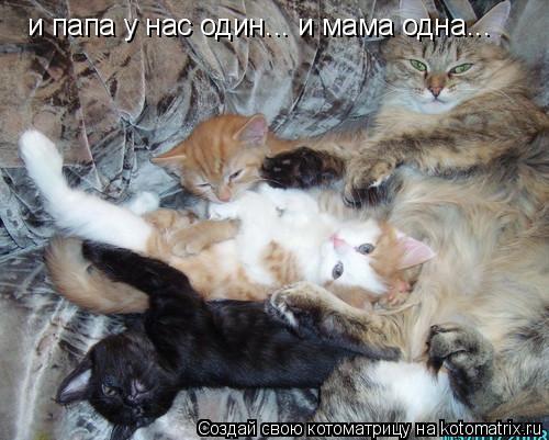 Котоматрица: и папа у нас один... и мама одна...