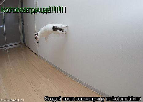 Котоматрица: котоматрица!!!!!! котоматрица!!!!!!