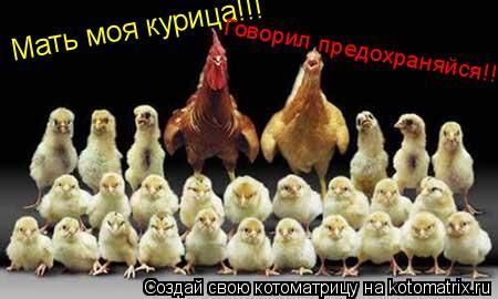 Котоматрица: Мать моя курица!!! Говорил предохраняйся!!!