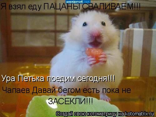 Котоматрица: Я взял еду ПАЦАНЫ СВАЛИВАЕМ!!! Ура Петька поедим сегодня!!! Чапаев Давай бегом есть пока не  ЗАСЕКЛИ!!!