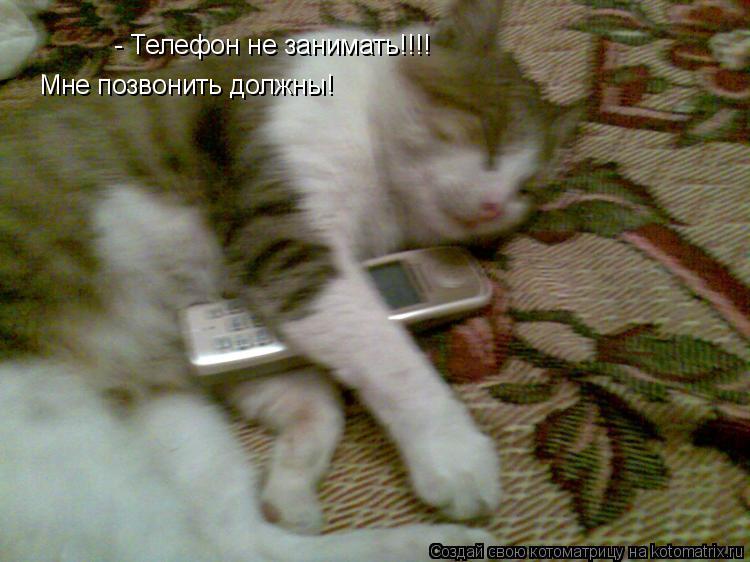 Котоматрица: - Телефон не занимать!!!! Мне позвонить должны!
