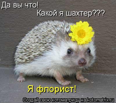 Котоматрица: Да вы что! Какой я шахтер??? Я флорист!