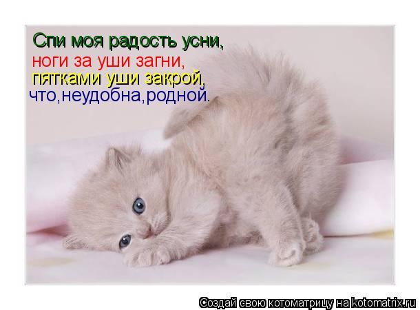 Котоматрица: Спи моя радость усни, ноги за уши загни, пятками уши закрой, что,неудобна,родной.