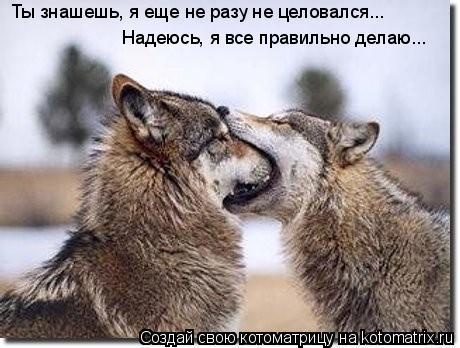 Котоматрица: Надеюсь, я все правильно делаю... Ты знашешь, я еще не разу не целовался...