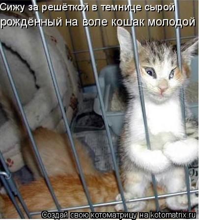 Котоматрица: Сижу за решёткой в темнице сырой рождённый на воле кошак молодой