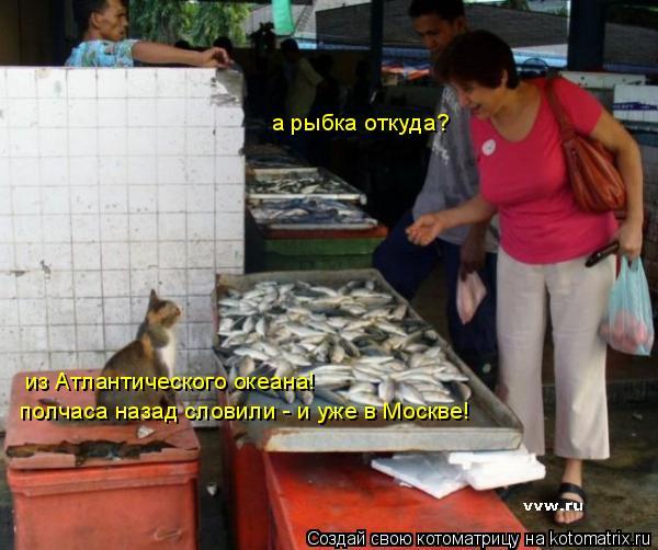 Котоматрица: а рыбка откуда? из Атлантического океана! полчаса назад словили - и уже в Москве!