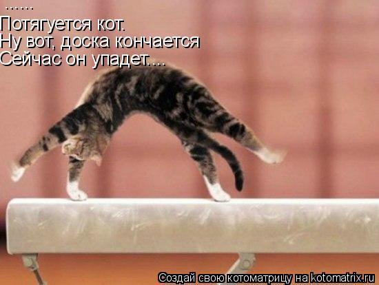 Котоматрица: ...... Потягуется кот. Ну вот, доска кончается Сейчас он упадет....