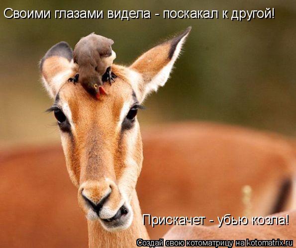 Котоматрица: Своими глазами видела - поскакал к другой! Прискачет - убью козла!