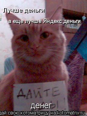Котоматрица: денег Лучше деньги а еще лучше Яндекс деньги