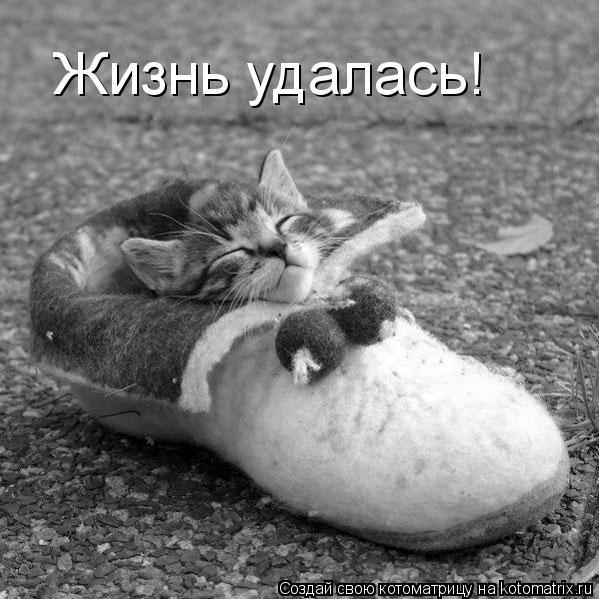 Котоматрица: Жизнь удалась!