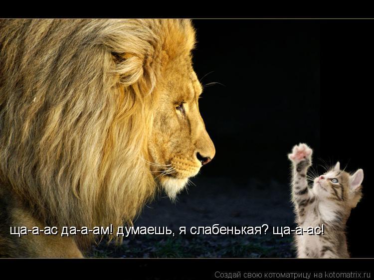 Котоматрица: ща-а-ас да-а-ам! думаешь, я слабенькая? ща-а-ас! ща-а-ас да-а-ам! думаешь, я слабенькая? ща-а-ас!