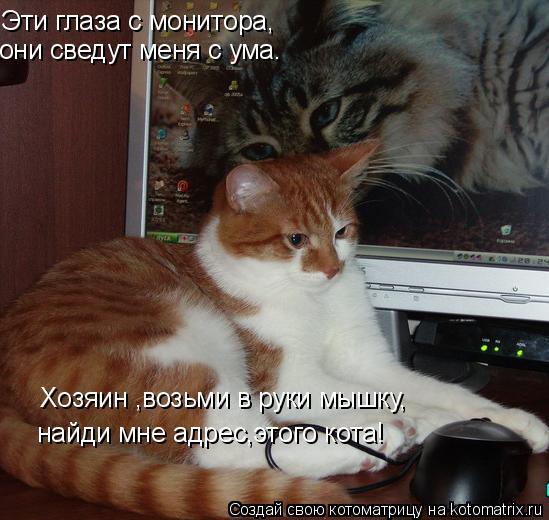 Котоматрица: Эти глаза с монитора, они сведут меня с ума. Хозяин ,возьми в руки мышку, найди мне адрес,этого кота!