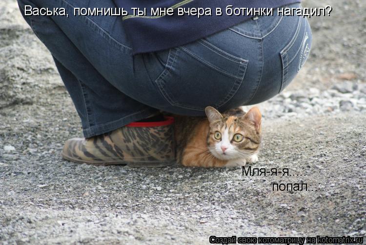 Котоматрица: Васька, помнишь ты мне вчера в ботинки нагадил? Мля-я-я.....  попал...