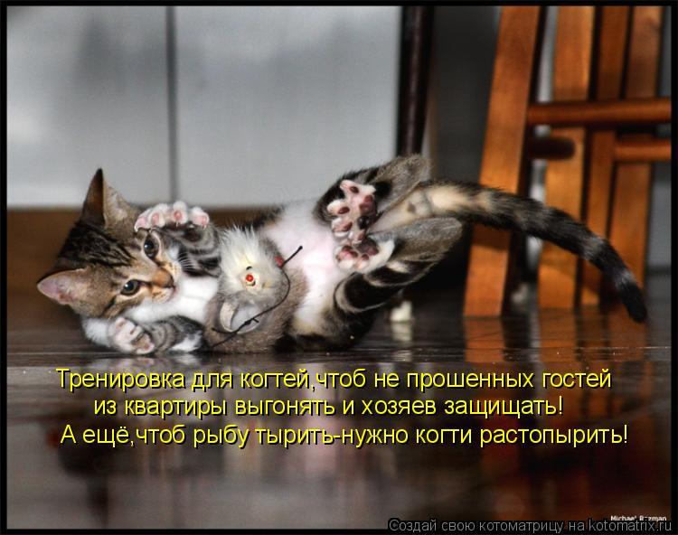 Котоматрица: Тренировка для когтей,чтоб не прошенных гостей из квартиры выгонять и хозяев защищать! А ещё,чтоб рыбу тырить-нужно когти растопырить!