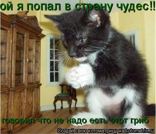 Котоматрица: ой я попал в страну чудес!! говорил что не надо есть этот гриб