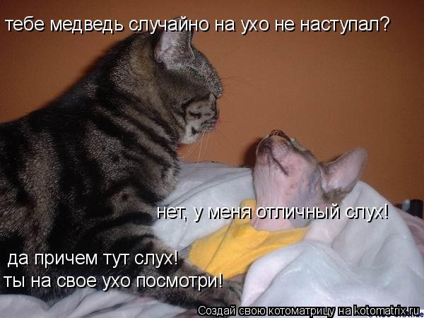 Котоматрица: тебе медведь случайно на ухо не наступал? нет, у меня отличный слух! да причем тут слух!  ты на свое ухо посмотри!