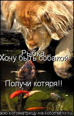 Котоматрица: Рыбка.. Хочу быть собакой! Получи котяря!!