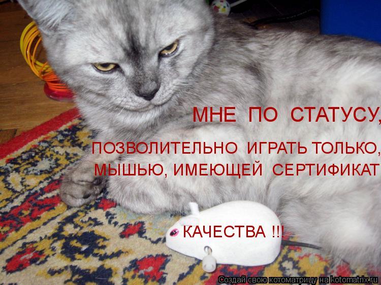 Котоматрица: ПОЗВОЛИТЕЛЬНО  ИГРАТЬ ТОЛЬКО,  МНЕ  ПО  СТАТУСУ,  МЫШЬЮ, ИМЕЮЩЕЙ  СЕРТИФИКАТ  КАЧЕСТВА !!!