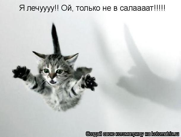 Котоматрица: Я лечуууу!! Ой, только не в салаааат!!!!!