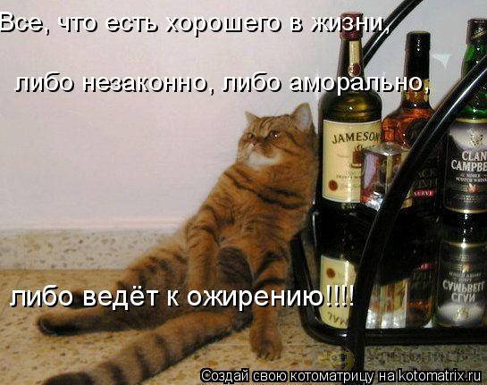 Котоматрица: Все, что есть хорошего в жизни,  либо незаконно, либо аморально, либо ведёт к ожирению!!!!