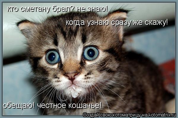 Котоматрица: кто сметану брал? не знаю! когда узнаю сразу же скажу! обещаю! честное кошачье!