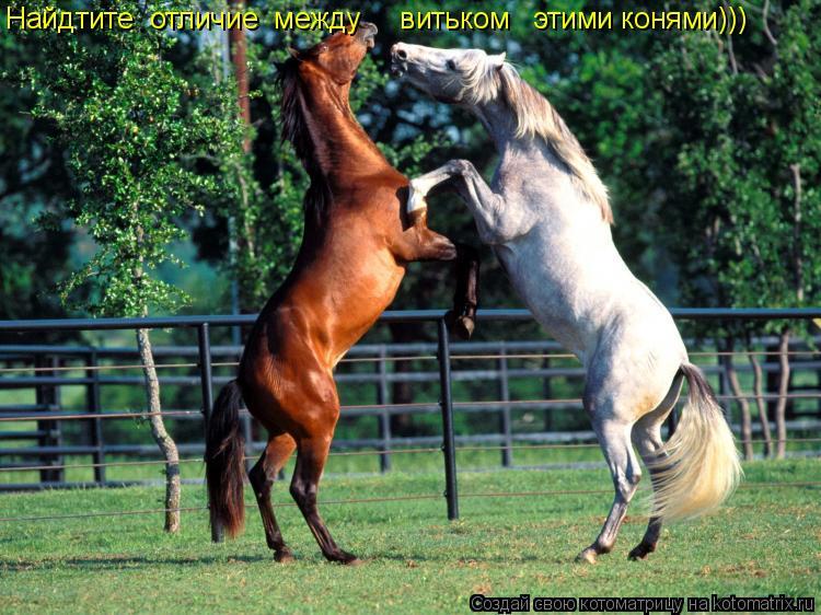 Котоматрица: Найдтите  отличие  между     витьком   этими конями)))