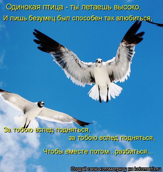 Котоматрица: Одинокая птица - ты летаешь высоко, И лишь безумец был способен так влюбиться, За тобою вслед подняться,  за тобою вслед подняться, Чтобы вме