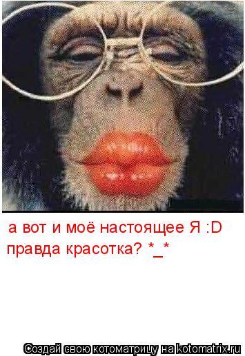 Котоматрица: а вот и моё настоящее Я :D правда красотка? *_*