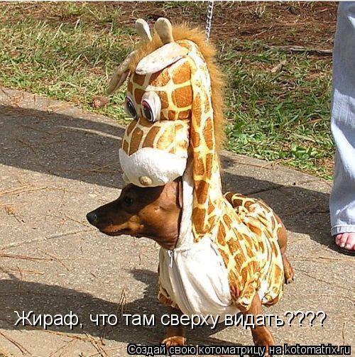 Котоматрица: Жираф, что там сверху видать????