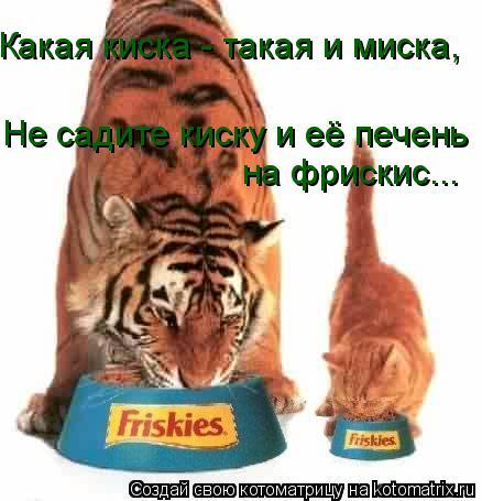 Котоматрица: Какая киска - такая и миска,  Не садите киску и её печень на фрискис...