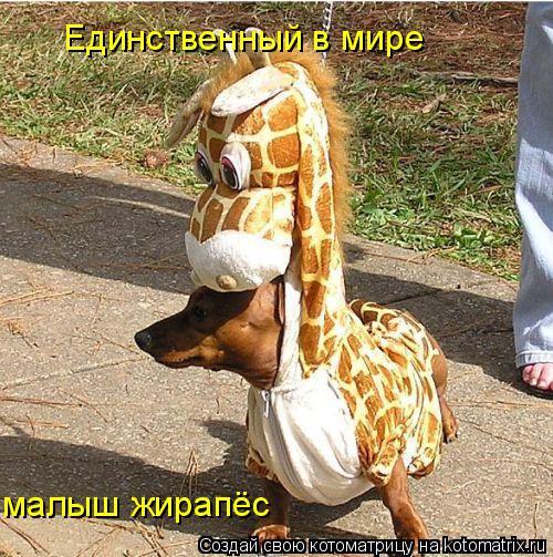 Котоматрица: Единственный в мире малыш жирапёс
