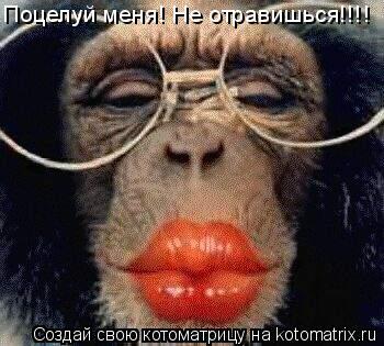 Котоматрица: Поцелуй меня! Не отравишься!!!!