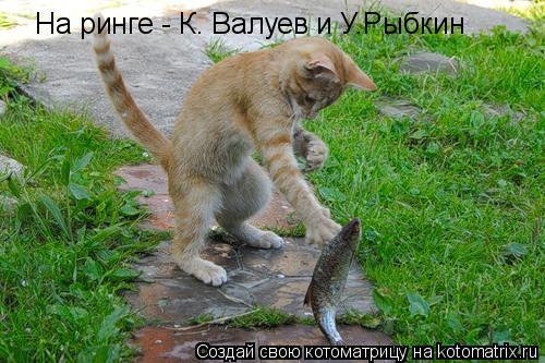 Котоматрица: На ринге - К. Валуев и У.Рыбкин